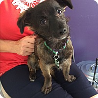 Adopt A Pet :: Federman - Thousand Oaks, CA