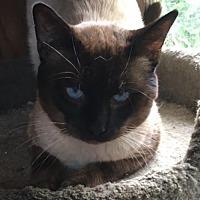 Adopt A Pet :: Mitchell - Burlington, WA