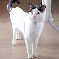 Adopt A Pet :: Shiraz - Toronto, ON