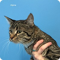 Adopt A Pet :: Alpine - Hibbing, MN