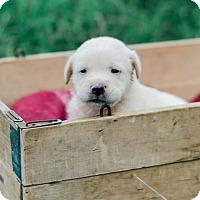 Adopt A Pet :: Pam $250 - Seneca, SC