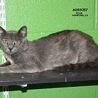 Adopt A Pet :: BISCUIT - Hanford, CA