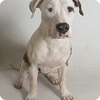 Adopt A Pet ::  - Redding, CA