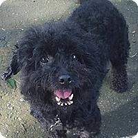 Adopt A Pet :: Missy - Alpharetta, GA