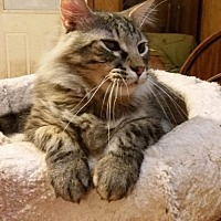 Adopt A Pet :: Jason - adoption pending - Hockessin, DE