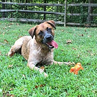 Adopt A Pet :: Charli - Sparta, NJ