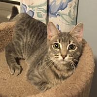 Adopt A Pet :: Hannah - Madison, NJ