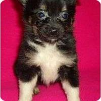 Adopt A Pet :: Greta - Plainfield, CT