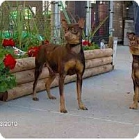 Adopt A Pet :: Franny - Nashville, TN