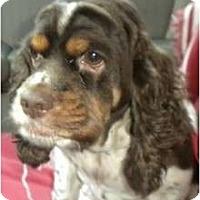 Adopt A Pet :: Lilly #2 - San Diego, CA