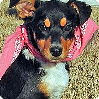 Adopt A Pet :: May - Gonzales, TX