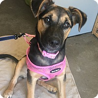 Adopt A Pet :: Basil - Henderson, KY