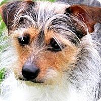 Adopt A Pet :: MARYLAND(PLAYFUL--TINY GIRL!! - Wakefield, RI