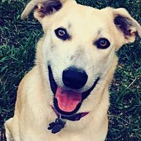Adopt A Pet :: Delta - Crosby, TX