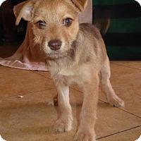 Adopt A Pet :: Toby - San Diego, CA
