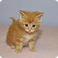 Adopt A Pet :: Axl - Medina, OH