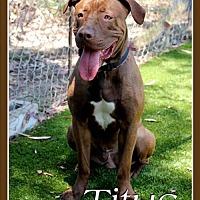 Adopt A Pet :: Titus - Fulton, MO