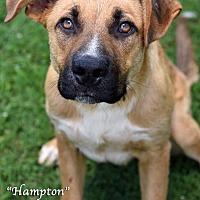 Adopt A Pet :: Hampton - Newnan City, GA