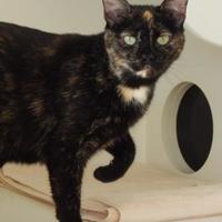 Adopt A Pet :: Mitten - Monroe, WI