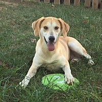 Adopt A Pet :: Hunter needs to be loved!! - Harrisonburg, VA