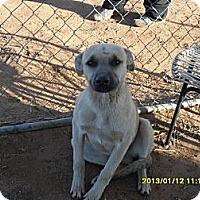 Adopt A Pet :: Sparky - Anton, TX