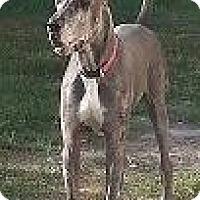 Adopt A Pet :: Dusty - Jupiter, FL