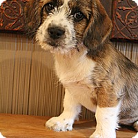 Adopt A Pet :: Moon Pie - Wytheville, VA