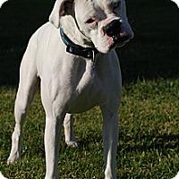 Adopt A Pet :: Lucy - Altadena, CA