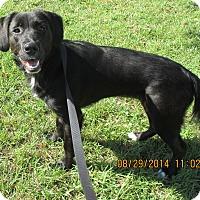 Adopt A Pet :: Sierra - Jacksonville, FL