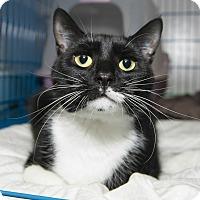 Adopt A Pet :: Mandy - New York, NY