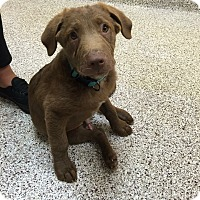 Adopt A Pet :: Monkey - Lewisville, IN