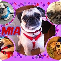 Adopt A Pet :: Mia - Walled Lake, MI