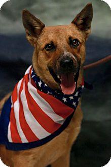 German Shepherd Dog Mix Dog for adoption in Twin Falls, Idaho - Balto