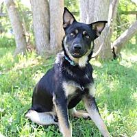 Adopt A Pet :: Broggy - SOUTHINGTON, CT