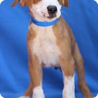 Adopt A Pet :: Chandler - Waldorf, MD