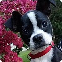 Adopt A Pet :: Bonnie - Courtland, AL
