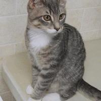 Adopt A Pet :: Scotty - Westville, IN