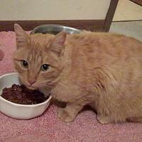 Adopt A Pet :: Cheeto - Red Oak, IA