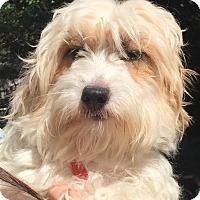 Adopt A Pet :: Bette - Orlando, FL
