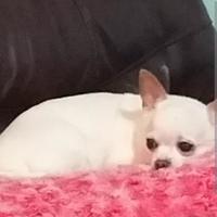 Adopt A Pet :: Sula - Saskatoon, SK