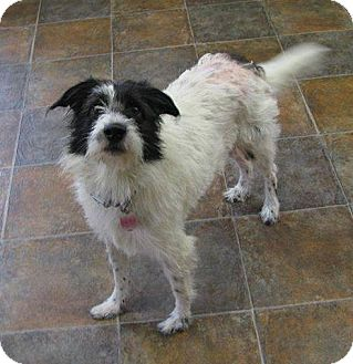 Terrier (Unknown Type, Medium) Dog for adoption in Mentor, Ohio - Roxy