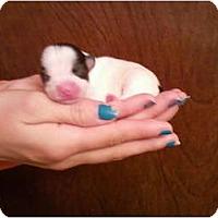Adopt A Pet :: Wilbur and the Gang - Seneca, SC