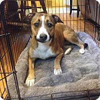 Adopt A Pet :: Luna - Raritan, NJ