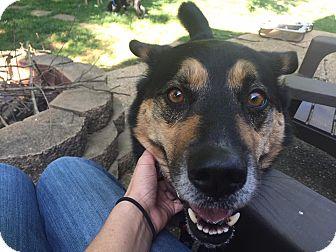 German Shepherd Dog/Husky Mix Dog for adoption in Carlisle, Pennsylvania - Puddy