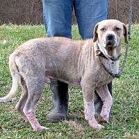 Adopt A Pet :: Jasper - Batavia, OH