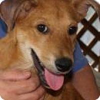 Adopt A Pet :: Jovi - Rexford, NY