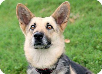 German Shepherd Dog Mix Dog for adoption in Austin, Texas - Cowgirl