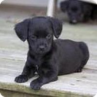 Adopt A Pet :: Mindy - Marlton, NJ
