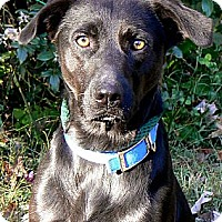 Adopt A Pet :: COLBY - Winchester, TN
