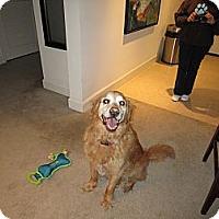 Adopt A Pet :: Sunni - Phoenix, AZ